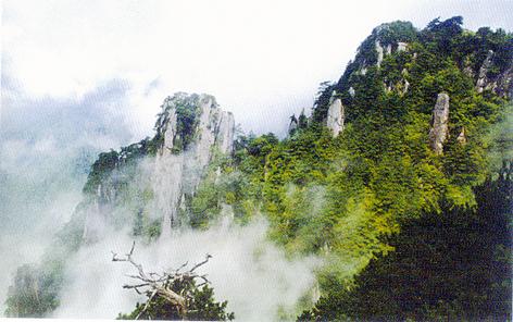 铜鼓县城市森林公园