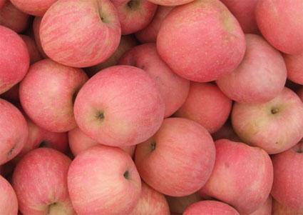 红富士苹果树坐果率较高