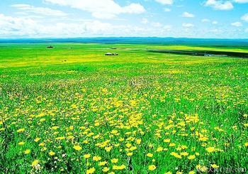 景区 - 木兰围场塞罕坝国家森林公园导游