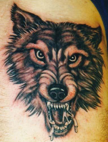 动物头像 - 纹身纹绣 - 新余纹身|纹刺|纹绣|激光洗
