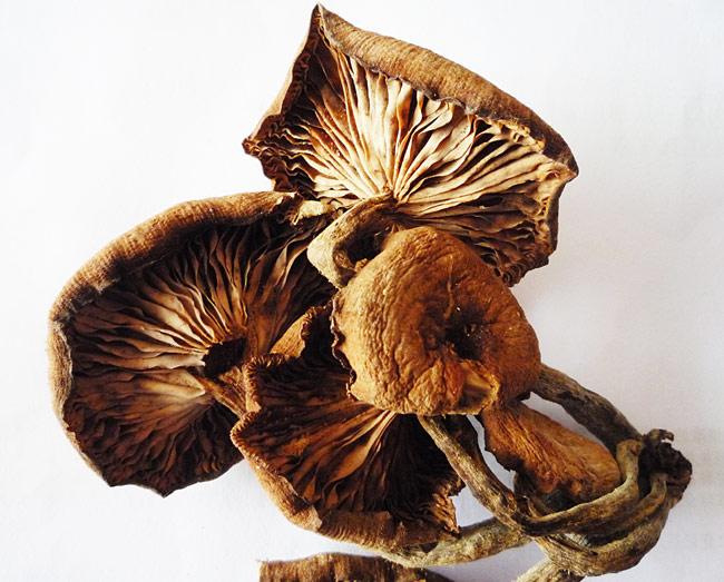 秋季的野生蘑菇图片下载 东北野生蘑菇市场如何 都有什么... 图片 99k 650x523