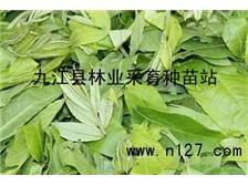 九江苗木种子价格表