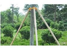 欢庆木材,原木支撑杆的服务哪家好公司,木材行业产品及服务专业到位