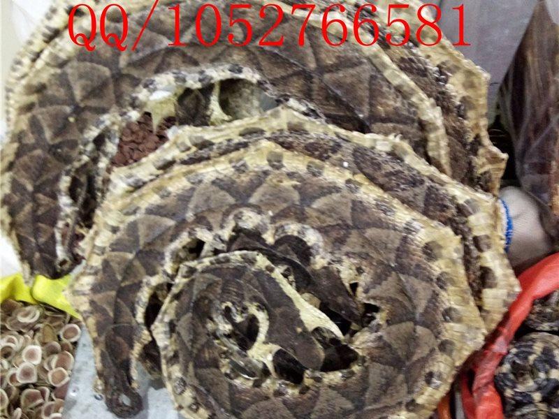 中药材优质蕲蛇多少钱一斤供应五步蛇白蛇百步蛇