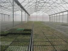 鼎鑫温室|郑州玻璃温室厂家|新乡蔬菜大棚质量