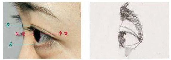 在侧面表现眼睛时,我们都会花较多的时间刻画近处的眼睛,而远处眼睛会