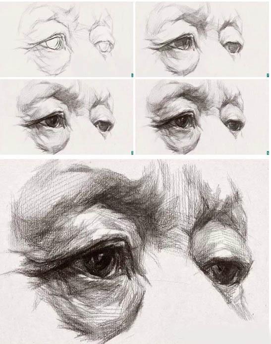 全侧面角度眼部表现规律:全侧面的眼球突出,只能看到一只眼睛的半个面