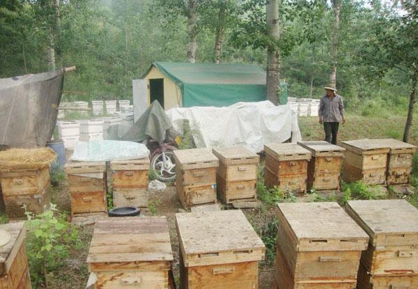 加入绿纯蜂蜜美食祝贺美食网哪里超市吃到广州的清淡图片