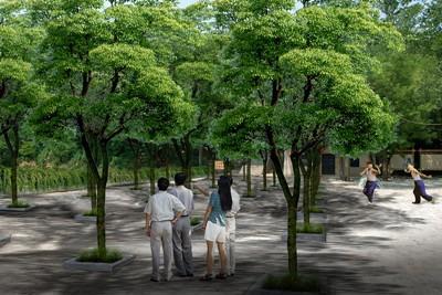 树阵相图_青岛_广场_v相图佳境共轭绘制怎么连线图片