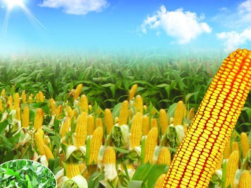 西藏大棚膜新疆农用地膜谷峰农业科技