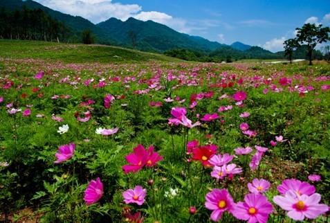 巫溪红池坝风景区是由巫溪国家森林公园为主的大型高山草场与高山