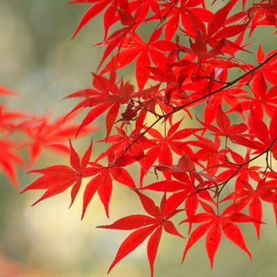 红叶林风景